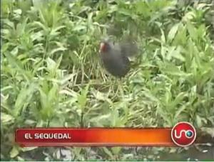 """""""Screenshot"""" de la nota """"El Sequedal"""" de la sección ¿Qué tal esto? del Noticiero Noticias Uno en su emisión del 31 de enero de 2009."""